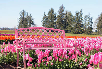 Photograph - Pink Bench At Tulip Farm by David Gn
