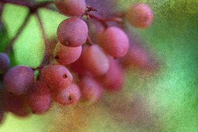 Photograph - Pink Berries 1 by WB Johnston