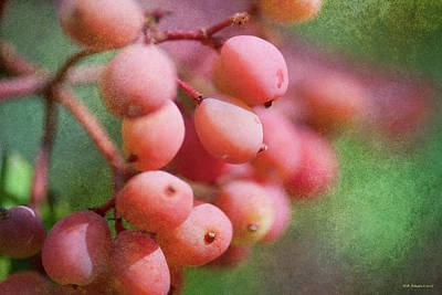 Photograph - Pink Berries 3 by WB Johnston