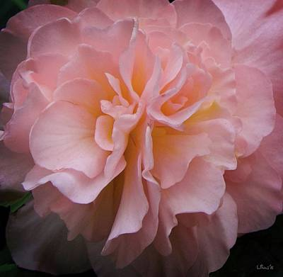 Photograph - Pink by Bill Linn