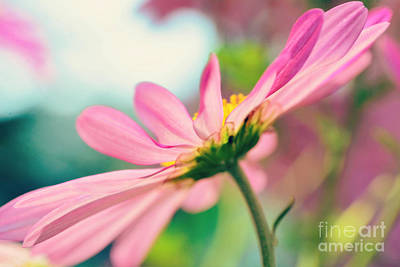 Photograph - Pink Bliss by Kelly Nowak