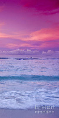 Bliss Photograph - Pink Bliss -  Part 3 Of 3 by Sean Davey