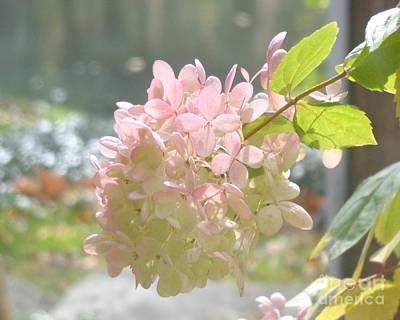 Photograph - Pink Bloom In Sun by Christina Verdgeline