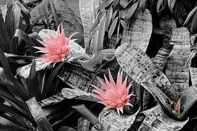 Photograph - Pink Blooms by Susan  McMenamin