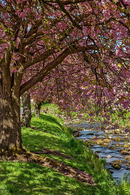 Photograph - Pink Blossom By The River by Jeremy Lavender Photography