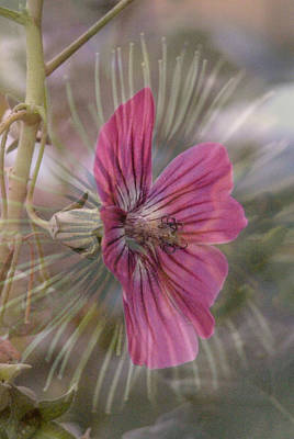 Photograph - Pink Blossom by Christina Knapp