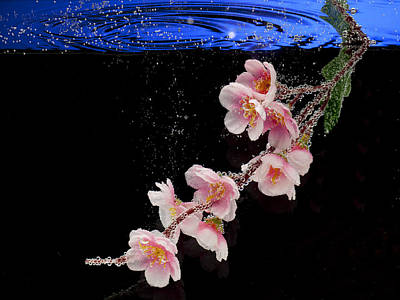 Photograph - Pink Blossom In Water With Bubbles by Dmitry Soloviev