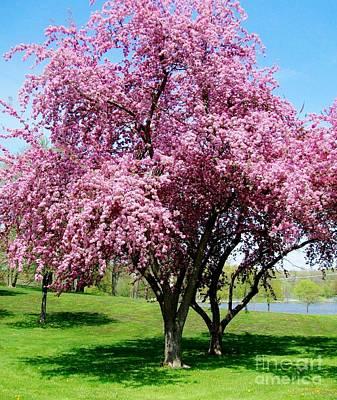 Pink Blossom Tree Art Print by Marsha Heiken