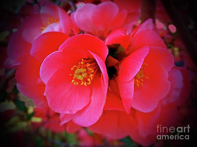 Digital Art - Pink Blossomed Branch by Jasna Dragun