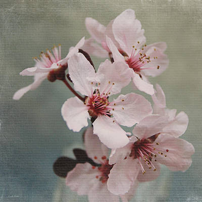 Pink Blossoms 2- Art By Linda Woods Art Print
