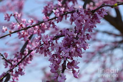 Farmanimals Photograph - Pink Blossoms by Barrie Stark