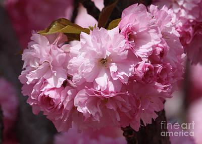 Pink Blossoms Closeup Art Print