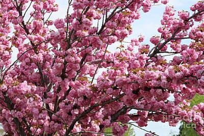 Pink Blossoms Galore Art Print by Carol Groenen