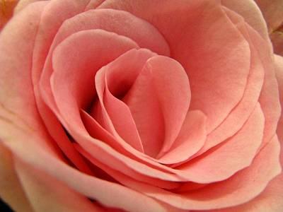 Photograph - Pink Blush by Rhonda Barrett