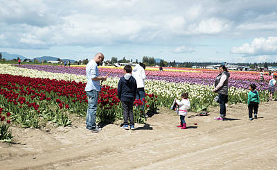 Photograph - Pink Boots And Burgundy Tulips by Tom Cochran