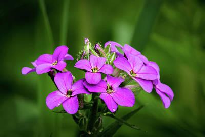 Photograph - Pink Bouquet  by David Heilman