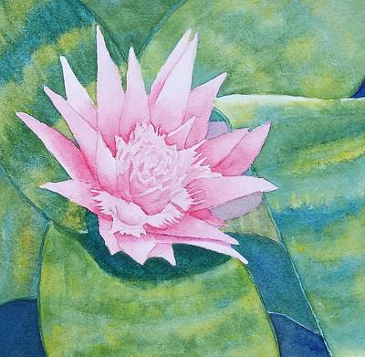 Painting - Pink Bromiliad by Judy Mercer