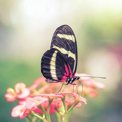 Photograph - Pink Butterfly In Dreamy Flower Garden by Open Range