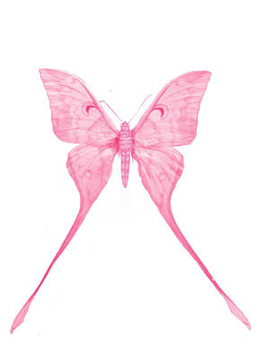 Flower Design Digital Art - Pink Butterfly by Art Spectrum
