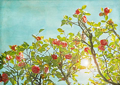 Lake Como Photograph - Pink Camellia Japonica Blossoms And Sun In Blue Sky by Brooke T Ryan