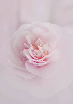 Camellia Photograph - Pink Camellia by Margaret Goodwin