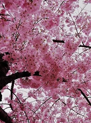 Pink Canopy Art Print
