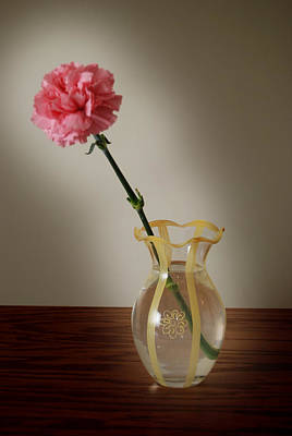 Pink Carnation Art Print by Dave Chafin