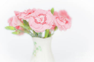 Photograph - Pink Carnations 2 by Steve Purnell