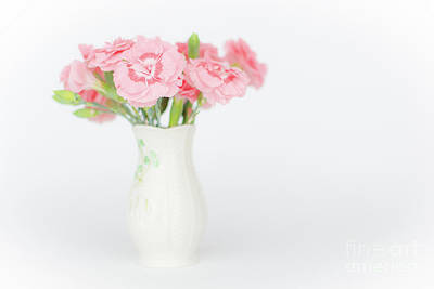 Photograph - Pink Carnations 3 by Steve Purnell