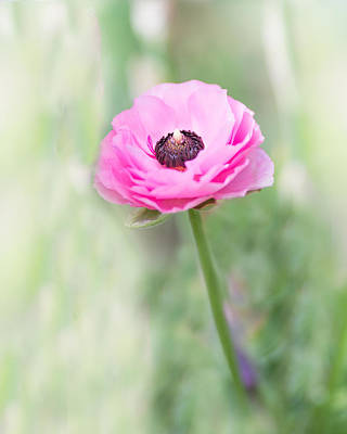 Photograph - Pink Center by Rebecca Cozart