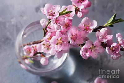 Photograph - Pink Cherry Blossom by Anastasy Yarmolovich