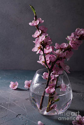 Photograph - Pink Cherry Blossom Twigs by Anastasy Yarmolovich