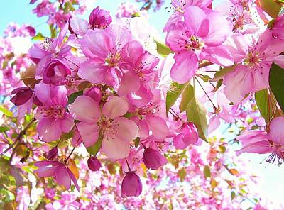 Photograph - Pink Cherry Blossoms by Lisa Gilliam