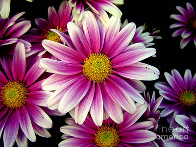 Photograph - Pink Chrysanthemums by Betsy Foster Breen
