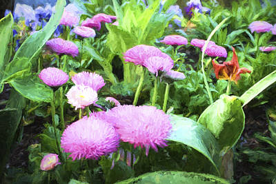 Photograph - Pink Chrysanthemums In Monets Garden  by David Smith