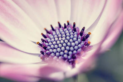 Photograph - Pink by Cindy Grundsten