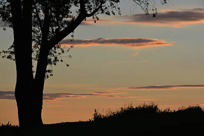 Photograph - Pink Clouds And Tree by Tana Reiff