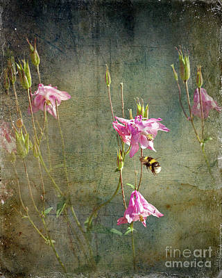 Digital Art - Pink Columbine by Liz Alderdice