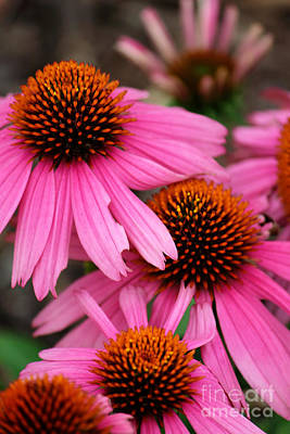 Photograph - Pink Cone Flowers by Jackie Farnsworth