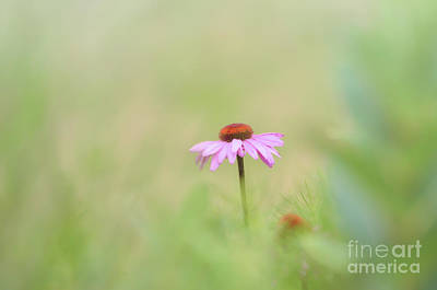 Aloha For Days - Pink Coneflower - Flowers of Summer by Kerri Farley