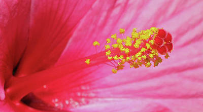 Photograph - Pink Cotton Candy 08 by Pamela Critchlow