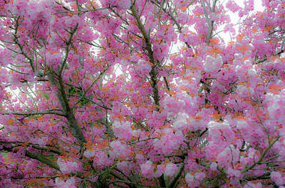 Photograph - Pink Cotton Candy Tree by Tikvah's Hope