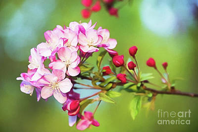 Pink Crabapple Blossoms Art Print