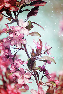Photograph - Pink Crabapple by Jim And Emily Bush