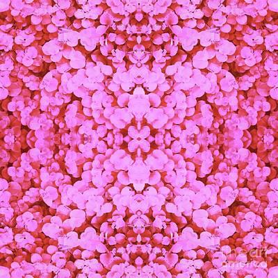 Digital Art - Pink Creeping Jenny by Rachel Hannah