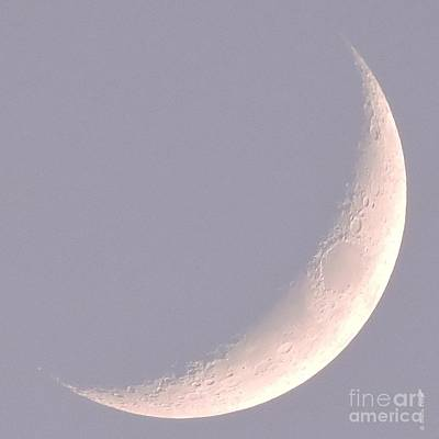 Photograph - Pink Crescent Moon by Shelia Kempf
