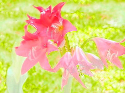 Photograph - Pink Crinum Water Color Beauty by Belinda Lee