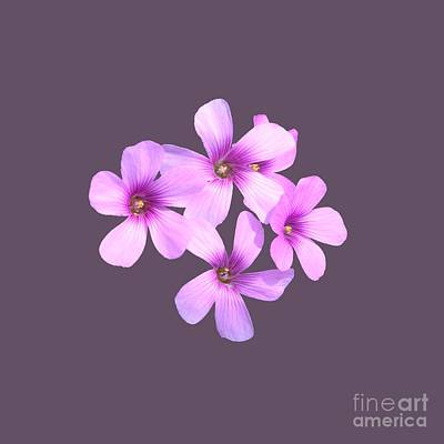 Pink Cutout Flowers Original by Linda Phelps