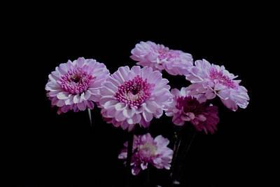 Photograph - Pink Dahlia Bunch On Black by Lynda Anne Williams