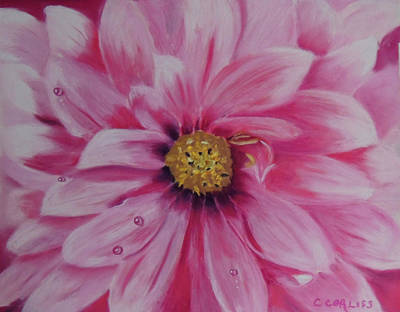 Pastel - Pink Dahlia I by Carol Corliss